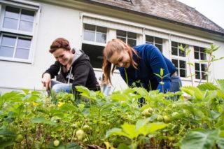 Erdbeeren eignen sich gut für die Gartentherapie: Sie wachsen schnell und bringen gute Erträge. Foto: SMMP/Bock
